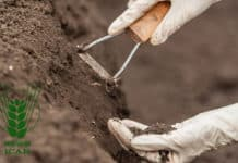 ICAR-Indian Institute of Soil Science Hiring Chemistry Candidates